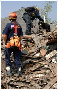FEMA Urban Search and Rescue Task Force members utilize their rescue dogs to search for residents impacted by Hurricane Katrina. Jocelyn Augustino/FEMA